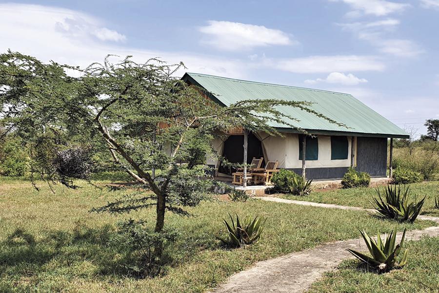AS-Serengeti-Ikoma-1