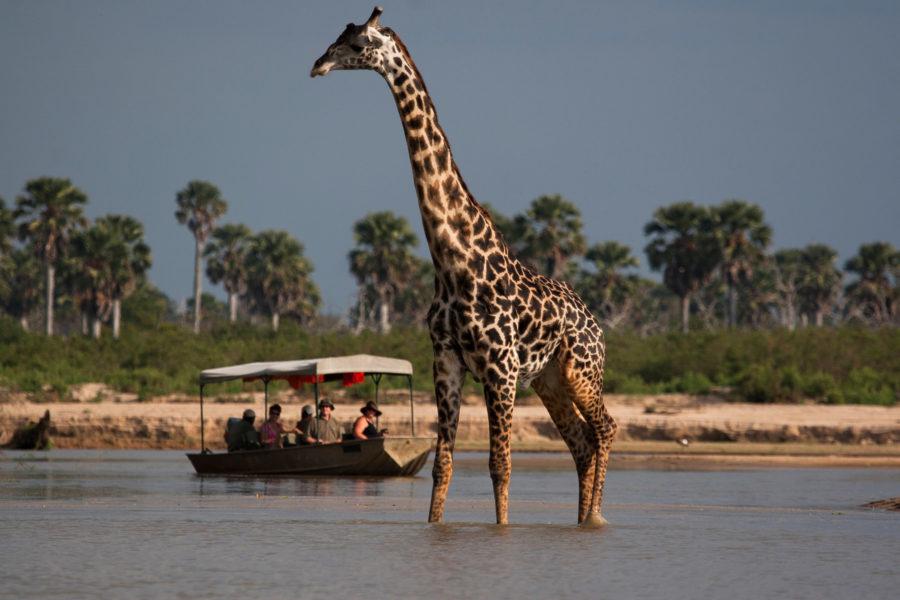 Boat Safari on the Rufiji River
