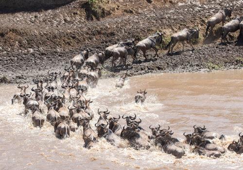 Explore Tanzania<br>Migration Special