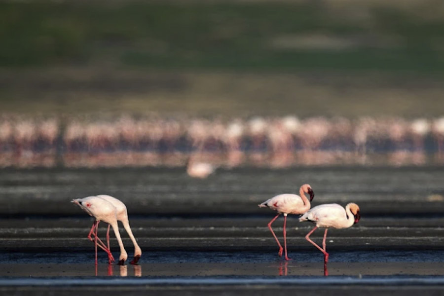 Flamingo-Lake-Walk-1