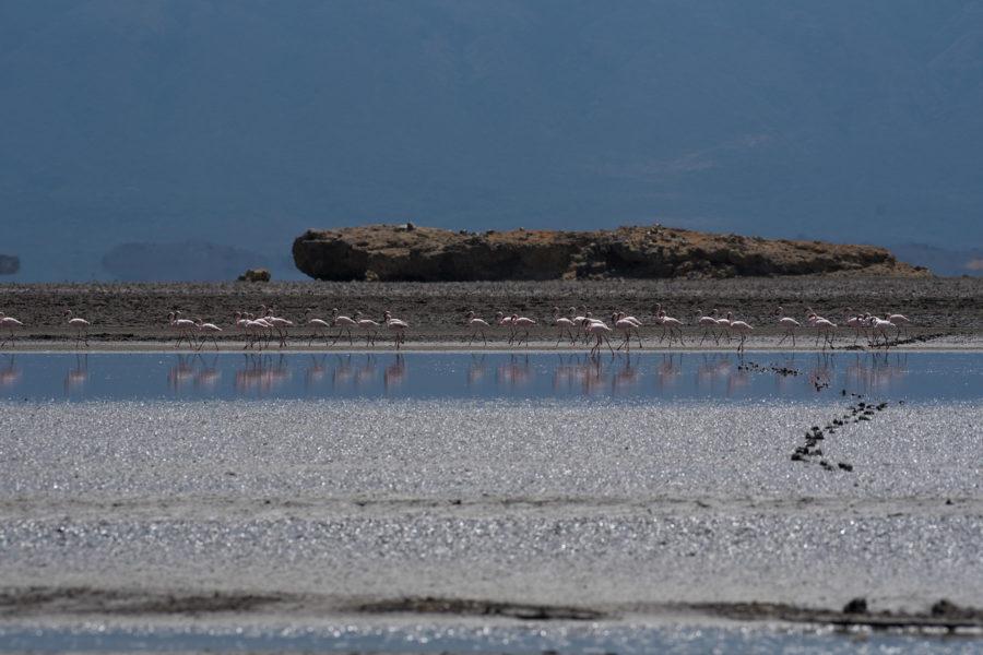 Flamingo Lake Walk – Walking from the camp