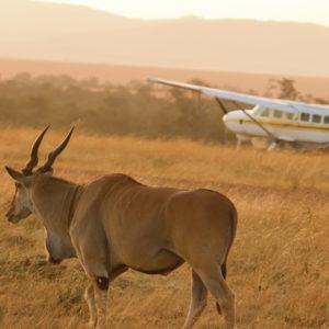 Torna in volo ad Arusha