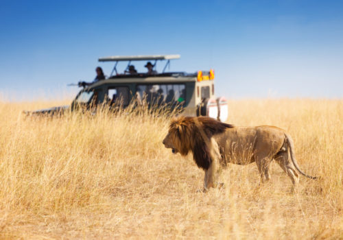 9 Day fly-in & drive safari<br>Northern Tanzania