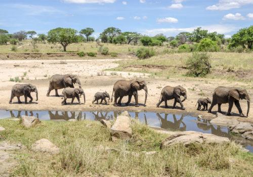Drive & fly back safari Serengeti