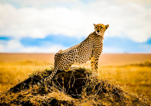 Day Safari Serengeti National Park