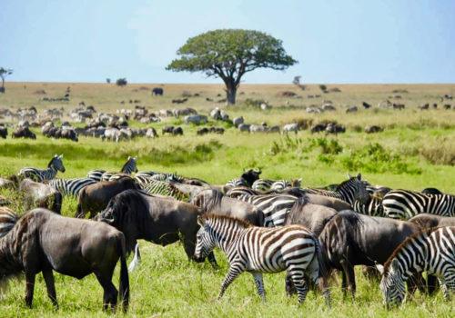 Classic Drive Safari Tarangire & Ngorongoro Crater