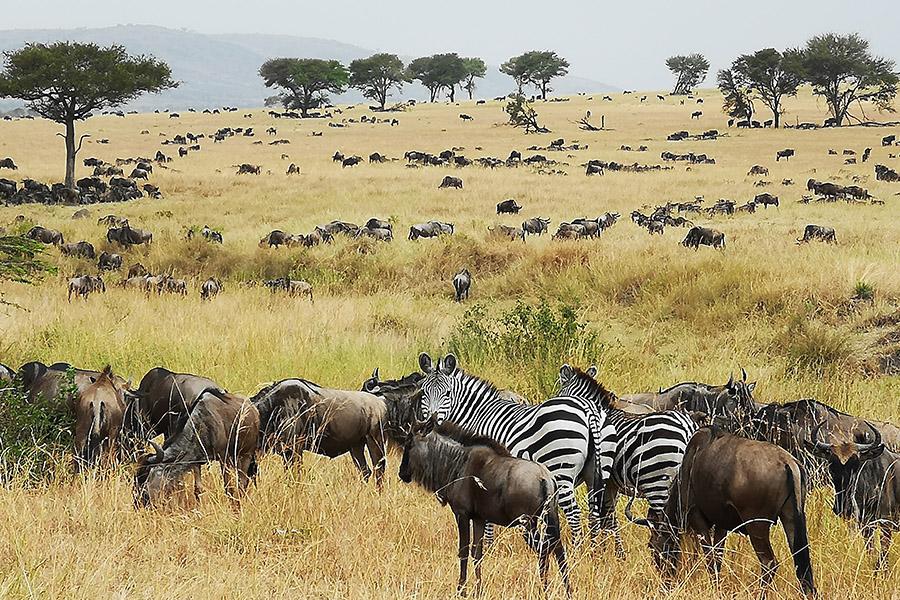 Africa Safari Serengeti Ikoma Accommodation