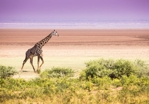 Beach & safari holiday Zanzibar & Lake Manyara